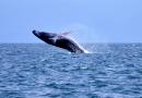 Сезон наблюдения за китами в Доминикане начинается со строгого санитарного протокола